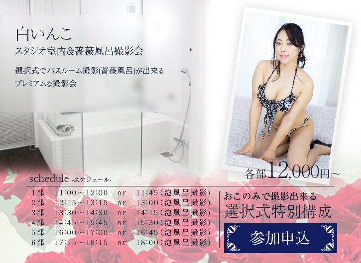 2020年11月15日 (日) ☆ 白いんこ  スタジオ室内&薔薇風呂 撮影会(1対1)